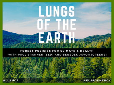 Lungs of the Earth – forest policies for health and climate