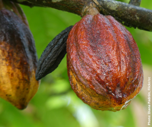 As the first round of EU-Ghana-Cote d'Ivoire Cocoa Talks wraps up, the way ahead is still unclear
