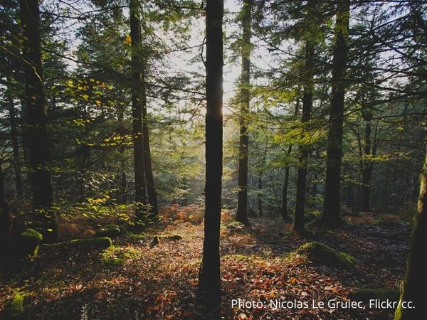 European Green Deal offers hope for the future of forests