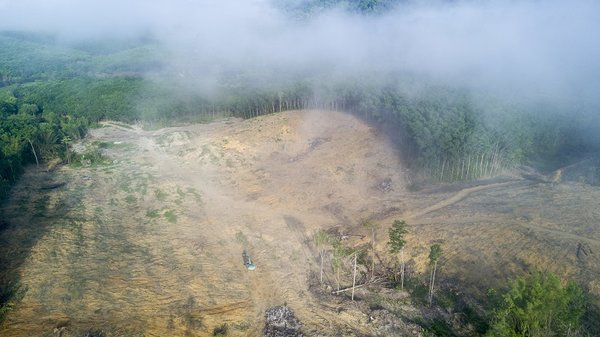 Voluntary corporate commitments no substitute for government action against illegal forest destruction, study reveals