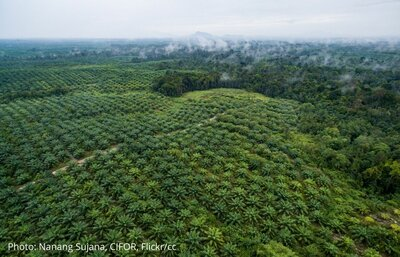 EU and UK Consultations on Deforestation Free Supply Chains