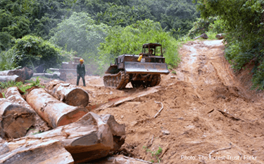 Vietnam VPA provides framework to improve forest governance